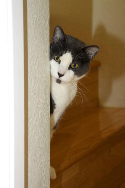Photograph - Curious Cat by Diana Haronis