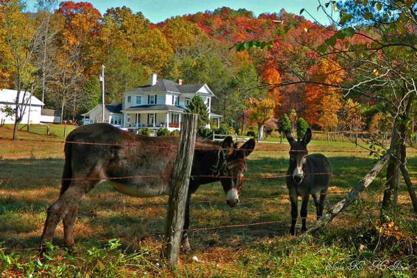 Photograph - Curious Donkeys  by Sheila Kay McIntyre