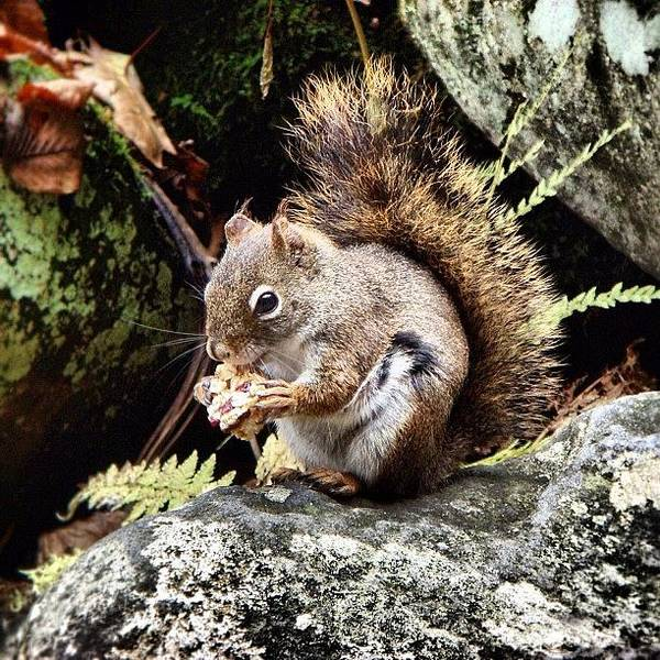 Mountain Wall Art - Photograph - Curious Squirrel by Joel Lopez
