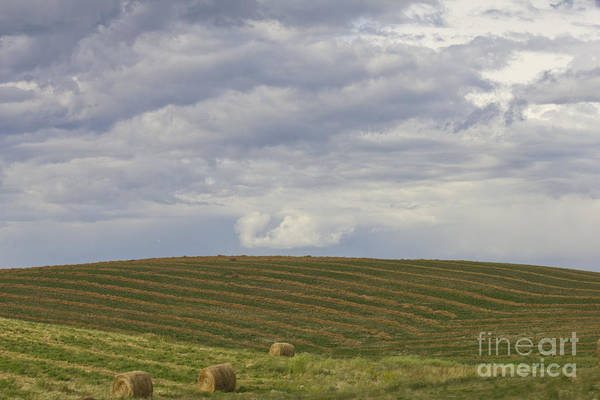 Photograph - Cut Hay And Clouds by Donna L Munro