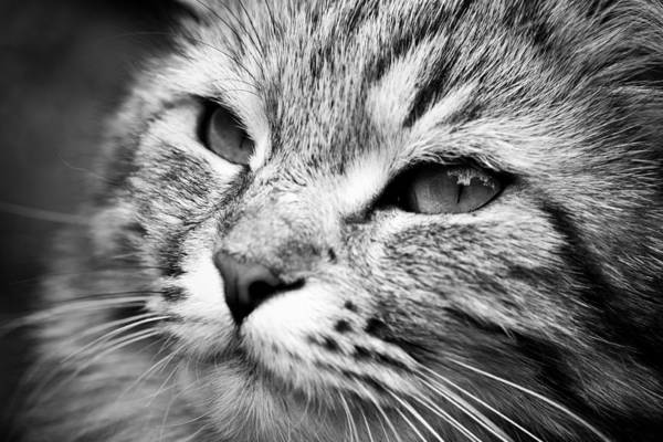 Hakon Photograph - Cute Cat by Hakon Soreide