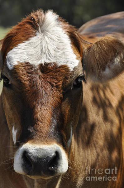 Cute Cow Art Print