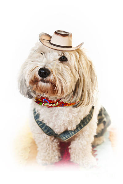 Western Costume Photograph - Cute Dog In Halloween Cowboy Costume by Elena Elisseeva