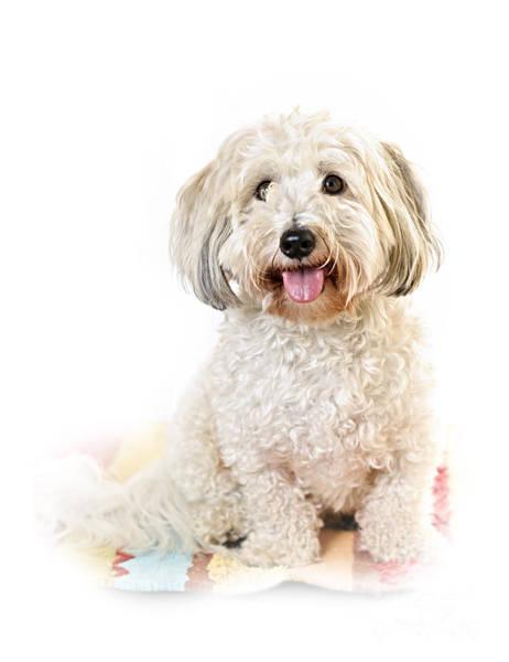 Puppies Photograph - Cute Dog Portrait by Elena Elisseeva