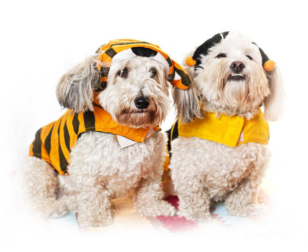 Wall Art - Photograph - Cute Dogs In Halloween Costumes by Elena Elisseeva