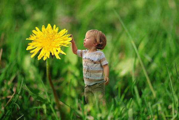 Young Boy Photograph - Cute Tiny Boy Playing In The Grass by Jaroslaw Grudzinski