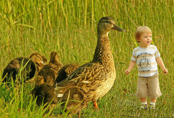Wall Art - Photograph - Cute Tiny Boy Playing With Ducks by Jaroslaw Grudzinski