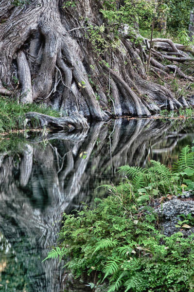 Photograph - Cypress Creek Reflections by James Woody