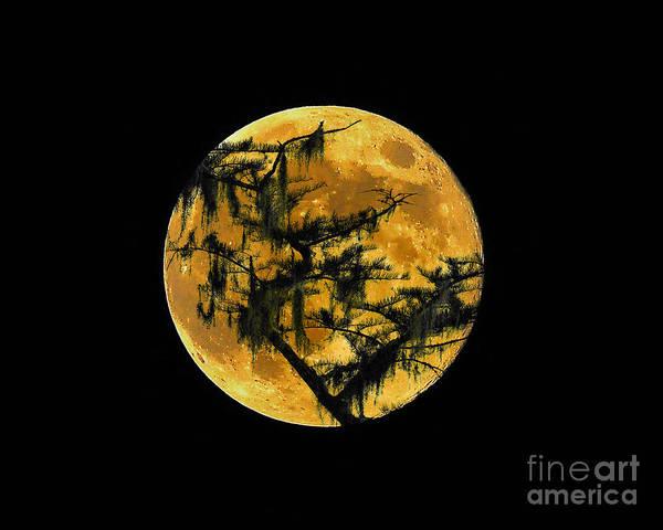 Wall Art - Photograph - Cypress Moon by Al Powell Photography USA