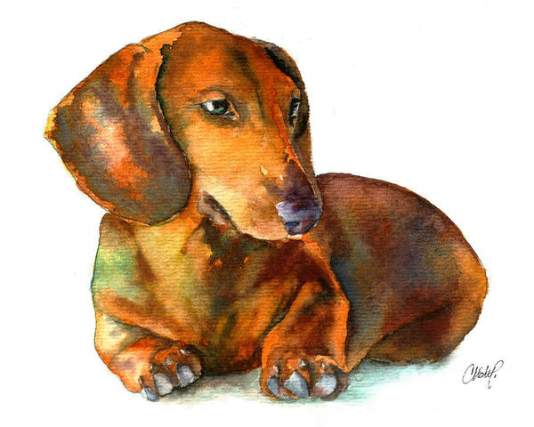 Painting - Dachshund Puppy by Christy Freeman Stark