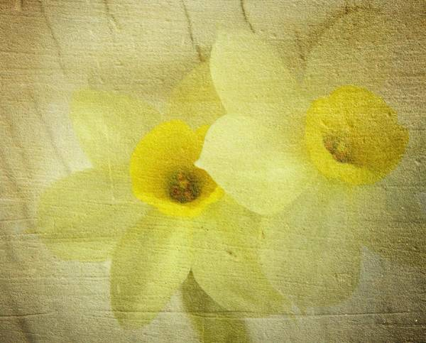 Wall Art - Photograph - Daffodil In Rustic Pastels by Chris Berry
