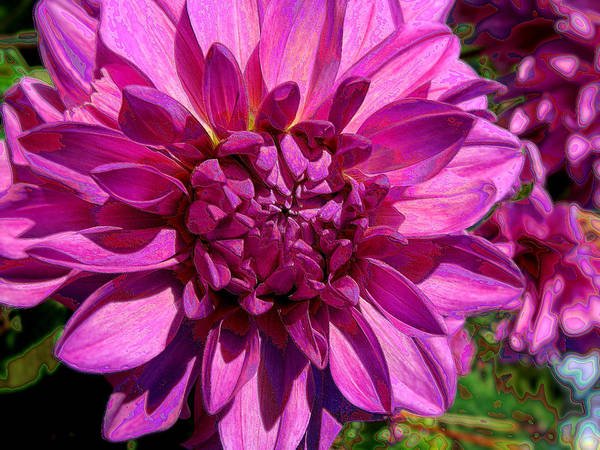 Photograph - Dahlia Describes The Color Pink by Lora Fisher