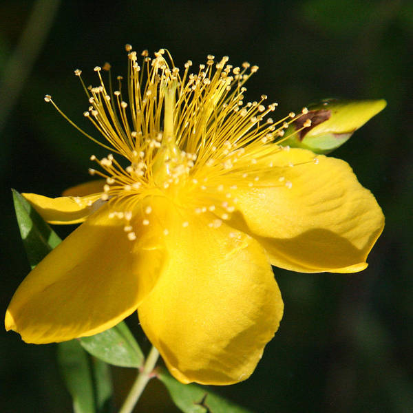 Photograph - Dainty Yellow by Donna Corless