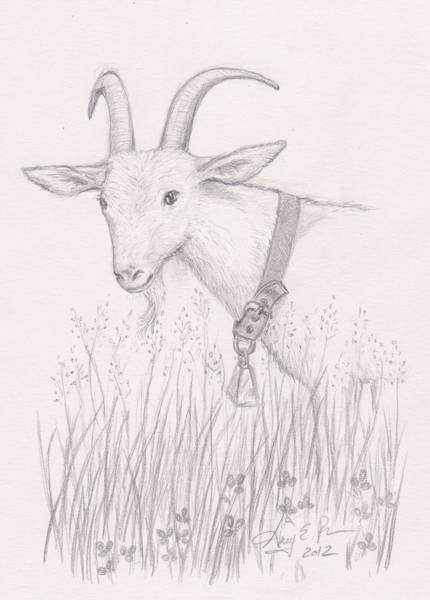 Homestead Drawing - Dairy Goat by Amy Peare