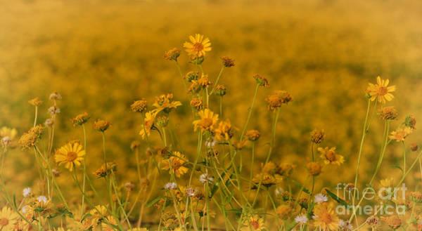 Photograph - Daisy's by Donna Greene