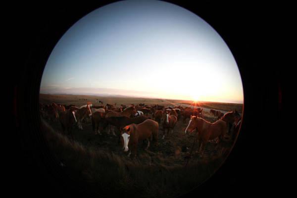 Photograph - Dalton Ranch by Diane Bohna
