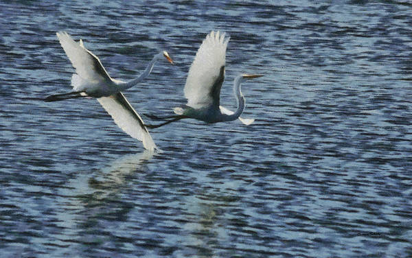 Egret Digital Art - Dance Of The Egrets Painterly by Ernie Echols