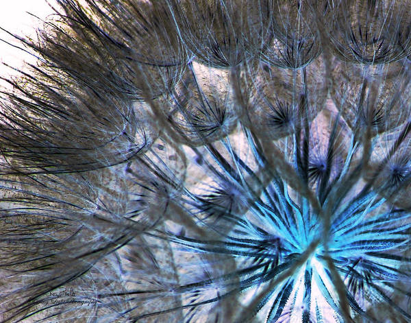Dandelion Puff Photograph - Dandelion Puff Abstract by Sheryl Cox