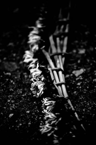 Hakon Photograph - Dandelion Wreath by Hakon Soreide