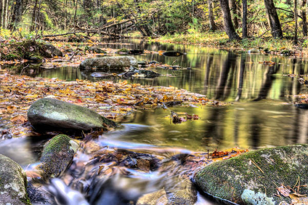 Photograph - Dappled by JC Findley
