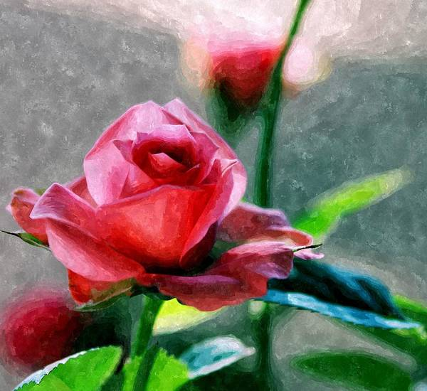 Photograph - Dappled Rose by Sarah Broadmeadow-Thomas