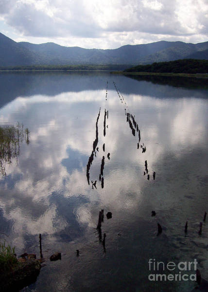 Photograph - Dark Reflections by Cheryl McClure