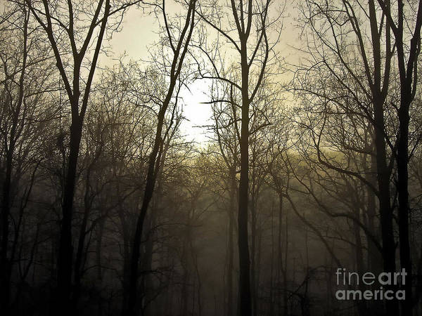 Darkside Photograph - Darkside by Alise Caccese