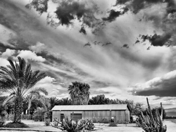 Rancho Mirage Photograph - Date Farm In La Quinta by Dominic Piperata