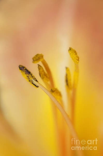 Photograph - Day Lily Up Close by David Waldrop