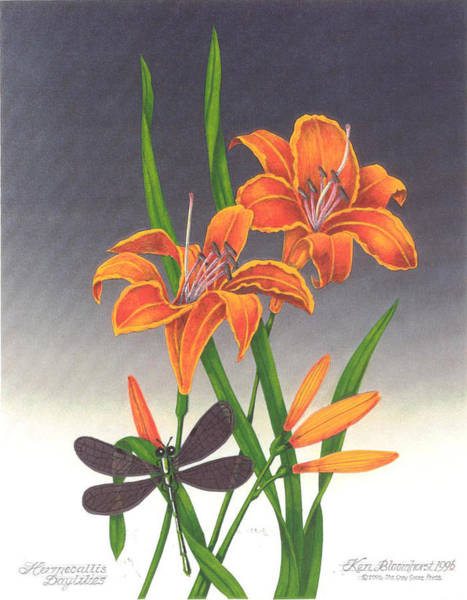 Wall Art - Mixed Media - Daylilies by Ken Bloomhorst