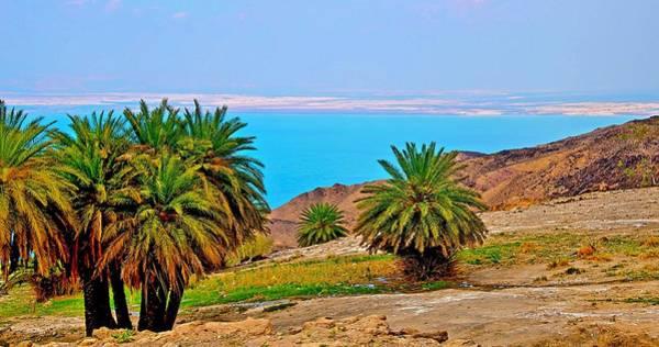 Jerash Photograph - Dead Sea Oasis by Radoslav Rundic
