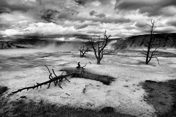 Wall Art - Photograph - Dead Trees by Guido Tramontano Guerritore