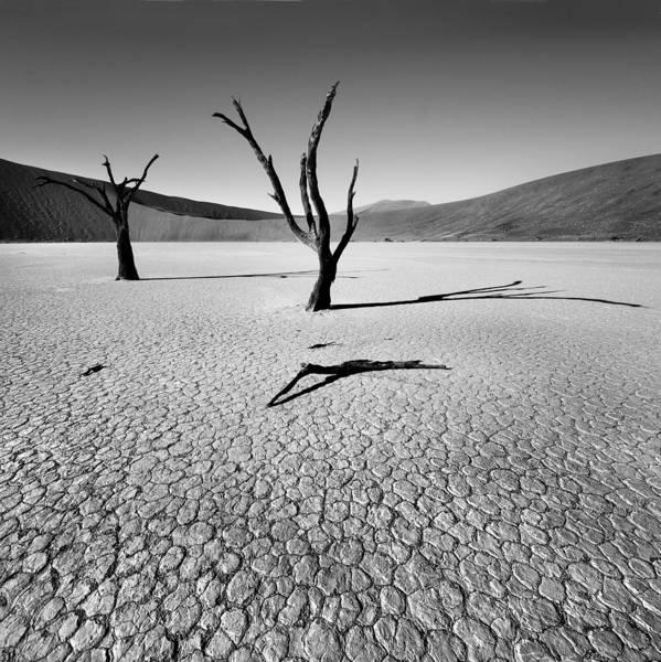 Deserts Photograph - Dead Vlei by Nina Papiorek