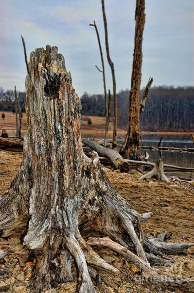 Hawk Creek Photograph - Dead Wood by Paul Ward