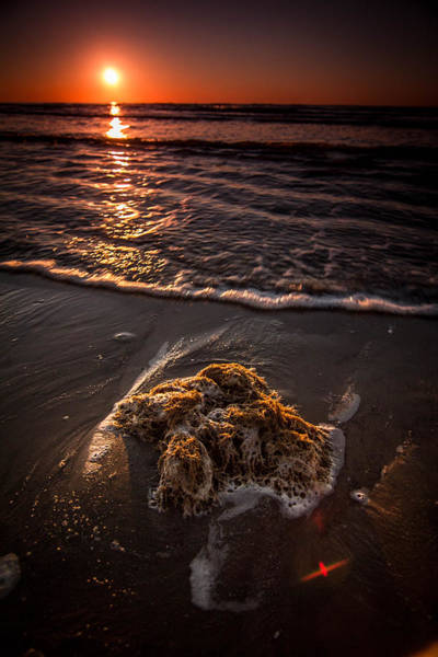 Wall Art - Photograph - Debris From The Sea by Chris Multop