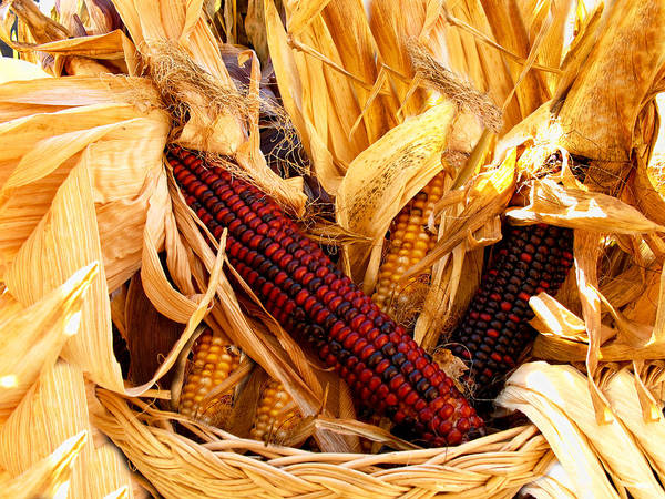 Photograph - Decorative Corn In A Hand Woven Wicker Basket by Chantal PhotoPix
