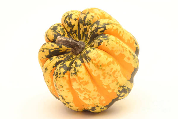 Acorn Squash Photograph - Decorative Squash by Ted Kinsman