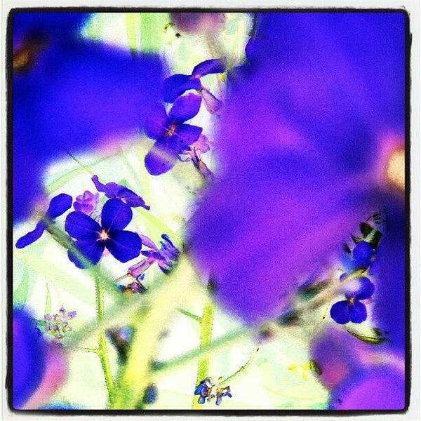Abstract Flowers Wall Art - Photograph - Deep Violets #abstract #android by Marianne Dow