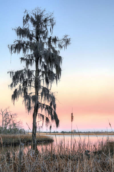 Photograph - Deeply Southern by JC Findley