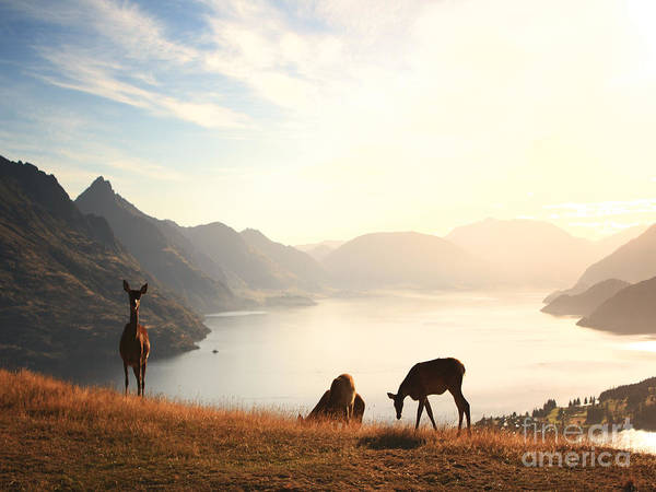 Deer Photograph - Deer At Sunset by Pixel  Chimp