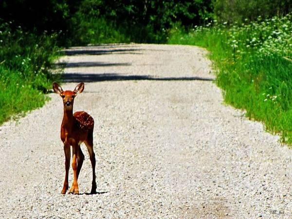 Photograph - Deer Crossing by Ms Judi