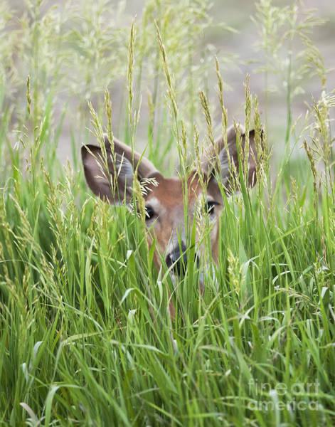 Deer In Hiding Art Print