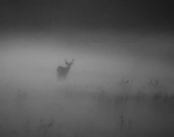 Deer In The Fog Art Print by Nicholas Palmieri