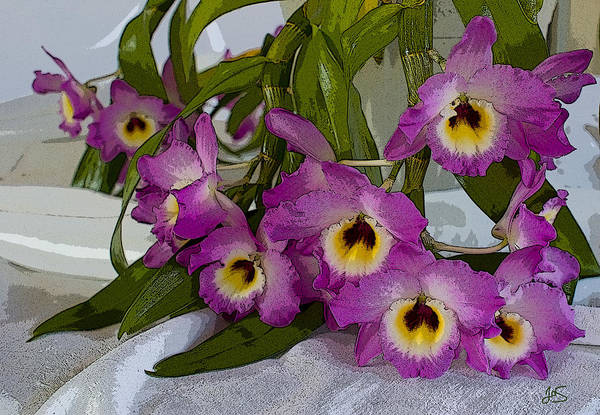 Photograph - Dendrobium Delight by Joanne Smoley