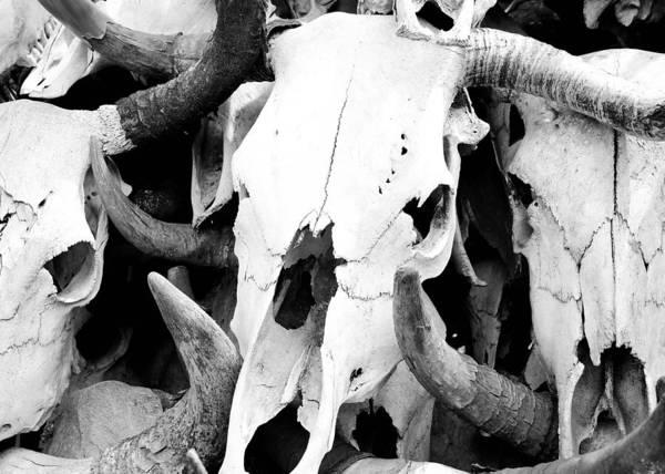 Desert Bones Art Print by Margaret Pitcher