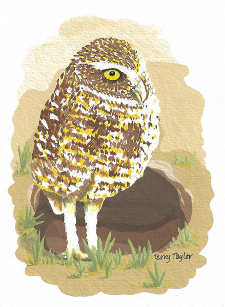 Burrowing Owl Painting - Desert Burrowing Oil by Terry Taylor