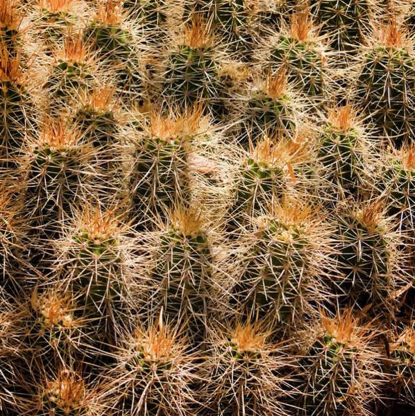 Photograph - Desert Cactus by Tom Singleton