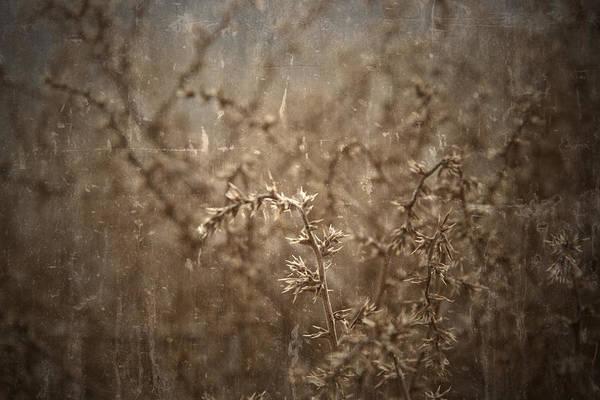 Photograph - Desert Thorns by Mark  Ross