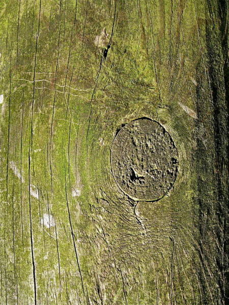 Photograph - Designs By Nature - Fp6 - Trees by Felix Zapata