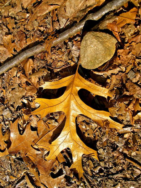 Photograph - Designs By Nature - Fp7 - Leaves by Felix Zapata